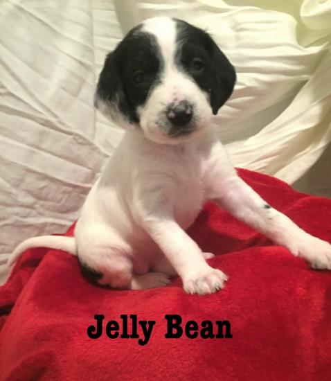 Jelly Bean *ADOPTED*