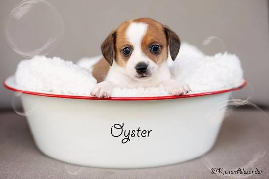 Oyster *ADOPTED*