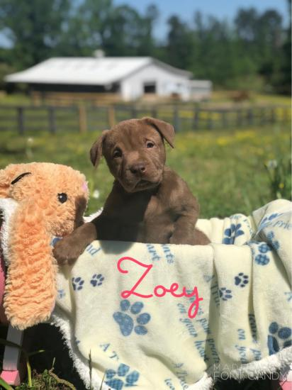 Zoey *ADOPTED*