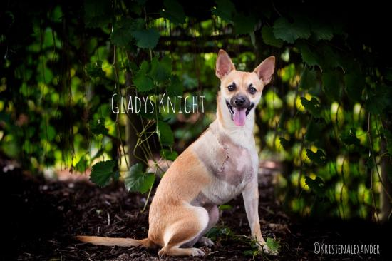 Gladys Knight *ADOPTED*