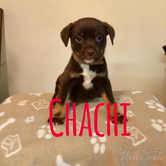 Chachi *ADOPTED*