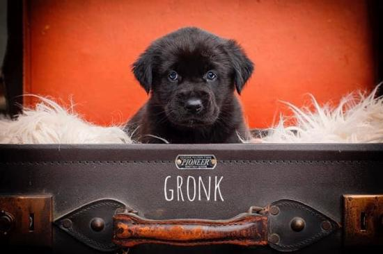 Gronk *ADOPTED*