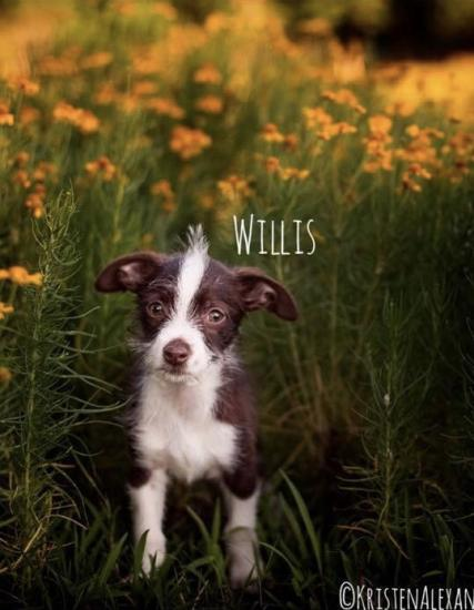 Willis *ADOPTED*