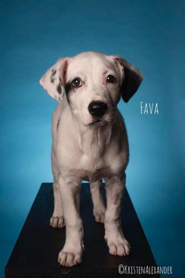 Fava *ADOPTED*