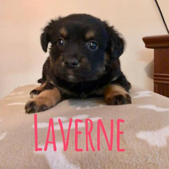Laverne *ADOPTED*