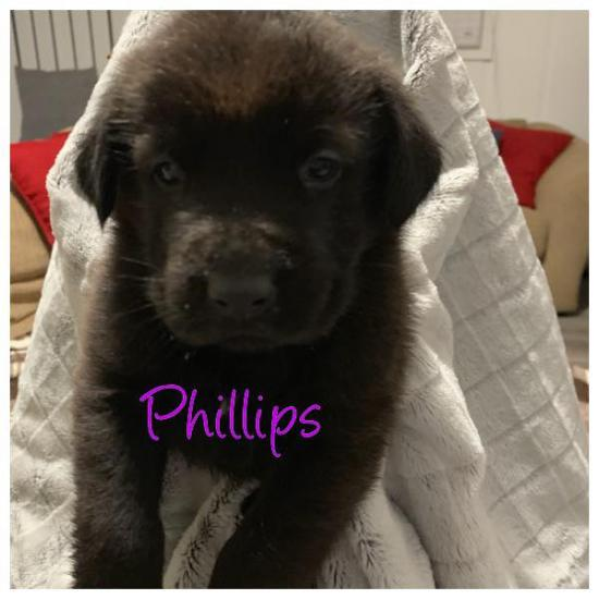 Phillips *ADOPTED*