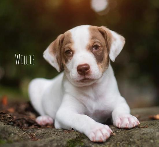 Willie *ADOPTED*